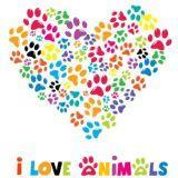 Balto kocham psy